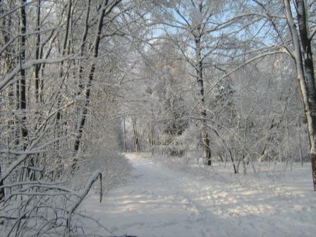Зимний лес в Вороенеже.