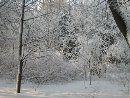 Зимний лес в Воронеже